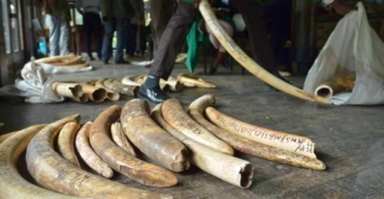 The CITES conference aims to tighten rules on trade in elephant ivory and other endangered animal and plant species.  By Tony KARUMBA (AFP/File)