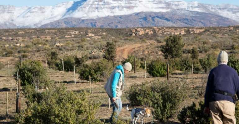 The climate on the plateaus of South Africa's rugged Cederberg mountains is similar to that of Mediterranean Europe.  By RODGER BOSCH (AFP)