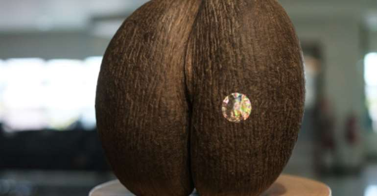 The coco de mer only grows on two Seychelles islands.  By Yasuyoshi CHIBA (AFP)
