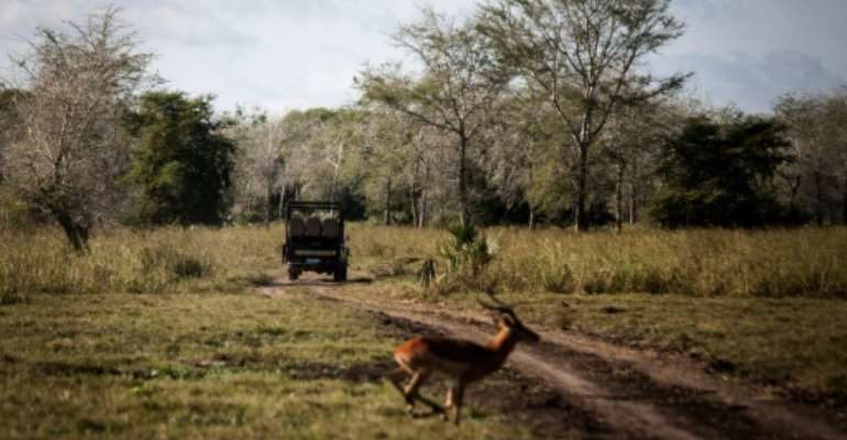 The Gorongosa National Park has seen wildlife return after Mozambique's civil war.  By John WESSELS (AFP/File)