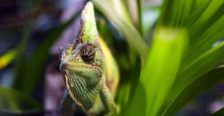 The study found that 90 percent of traded reptile species are captured from the wild.  By Ki Price (AFP/File)