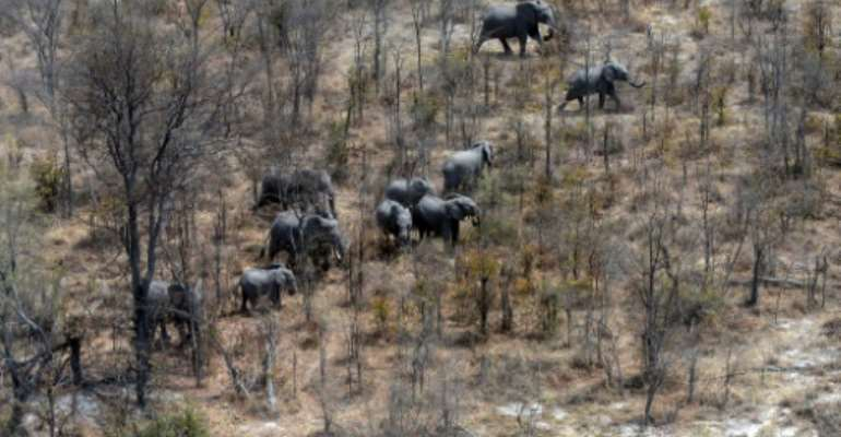 This aerial photograph shows elephants roaming in the plains of the Chobe district in the northern part of Botswana where officials say more than 100 elephants have died due to drought over the past two months.  By MONIRUL BHUIYAN (AFP)