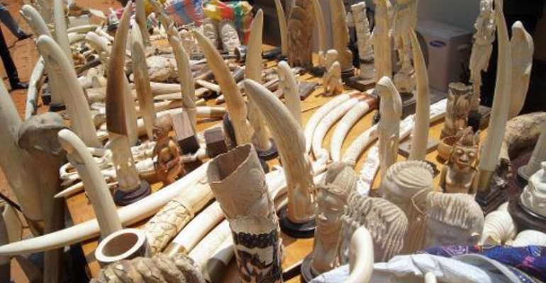 Part of a 700kg ivory haul seized on August 6, 2013 by the Togolese police.  By Emile Kouton (AFP/File)