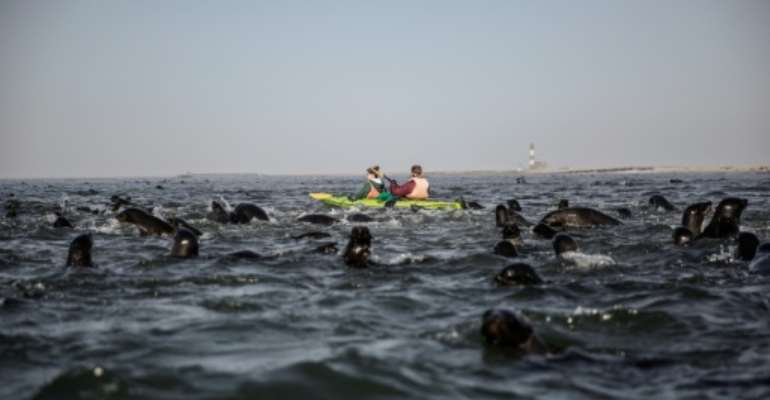 Tourists paddle among seals in 2017 in waters off Namibia, where a scandal over quotas for fishing has triggered US sanctions.  By GIANLUIGI GUERCIA (AFP/File)