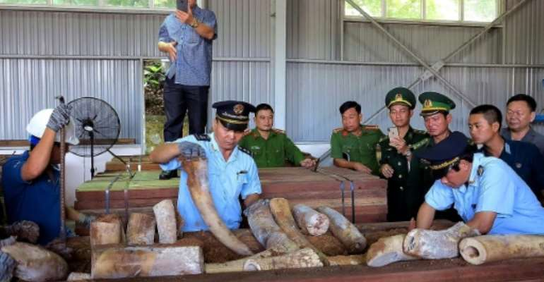 Vietnamese customs officials inspect a huge haul of suspected ivory seized from a timber shipment from the Republic of Congo.  By - (Vietnam News Agency/AFP)