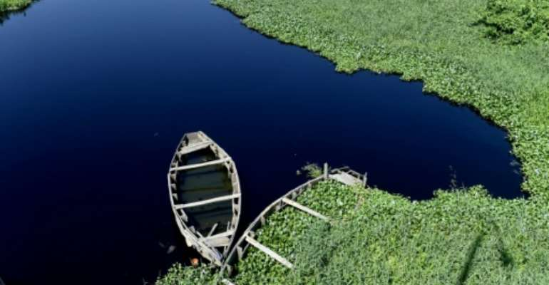 With waterways covered and silting up, the aquatic weed is also threatening fishing jobs and a vital food source.  By PIUS UTOMI EKPEI (AFP)