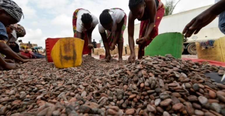 Women sort cocoa beans in Ivory Coast on July 3, 2019.  By Sia KAMBOU (AFP/File)