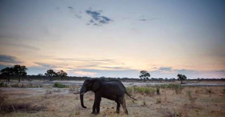 An African elephant is pictured on November 19, 2012, in Hwange National Park in Zimbabwe.  By Martin Bureau (AFP/File)