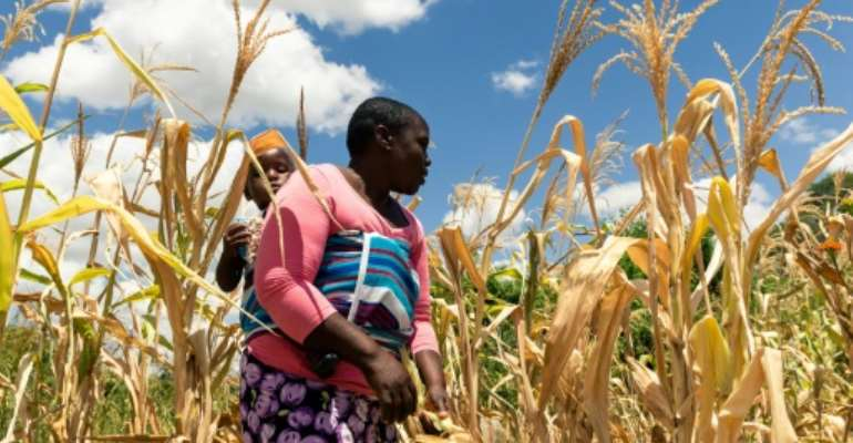 Zimbabwe is in the throes of a drought that has created havoc amid sky-high inflation.  By Jekesai NJIKIZANA (AFP/File)