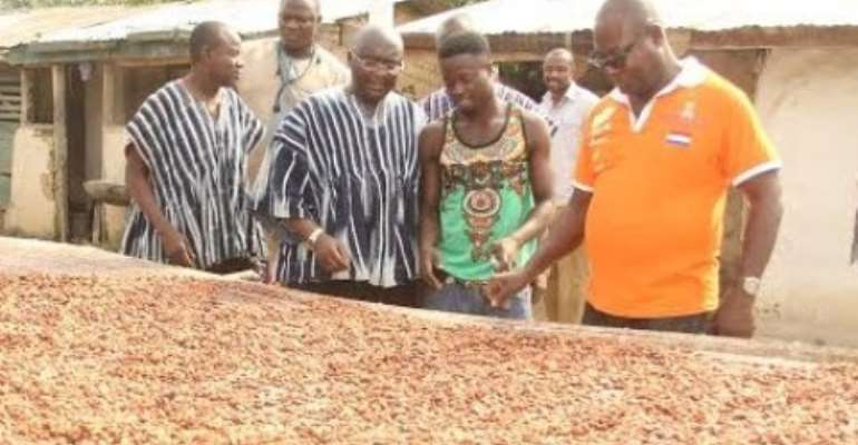 Cocoa Sector Not Collpasing; Bawumia Is 'Ignorant' – Gov't