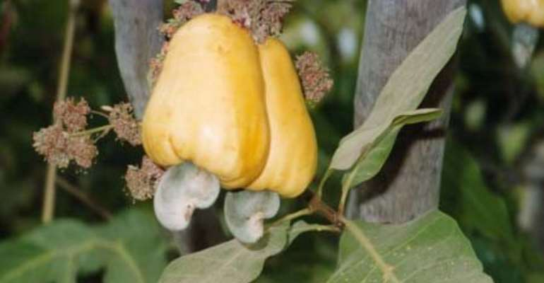 Two companies donate pesticides to cashew farmers