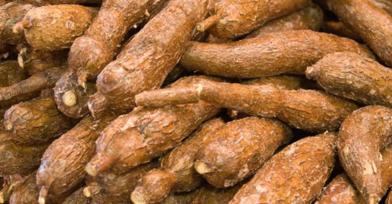 Cassava packed for market