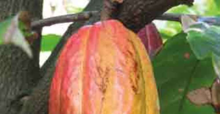 Watch Anas' video of cocoa smuggling in Ghana (Part 2 )