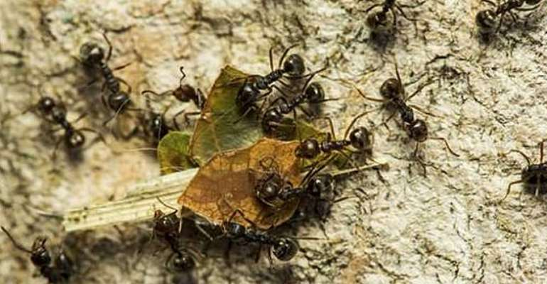 Man Sparks House Fire While Trying To Kill Ants
