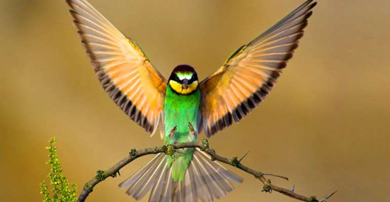 Xavi Bird Sanctuary To Be Integrated Into Tourist Hub