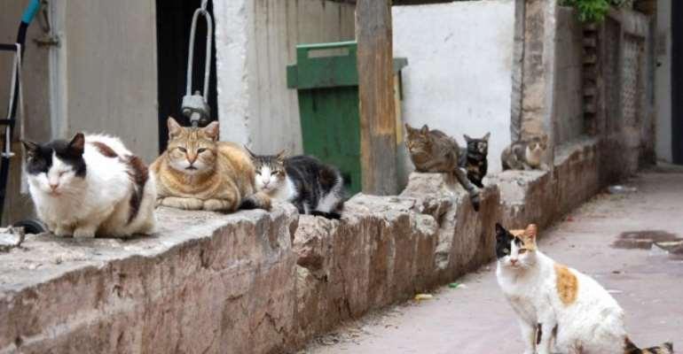 Cats (illustrative photo credit: Rachael Cerrotti/Flash90)