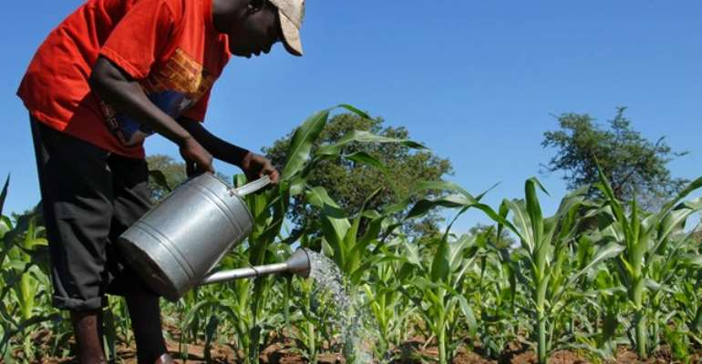 Fertilizer subsidy declining - SEND-Ghana report