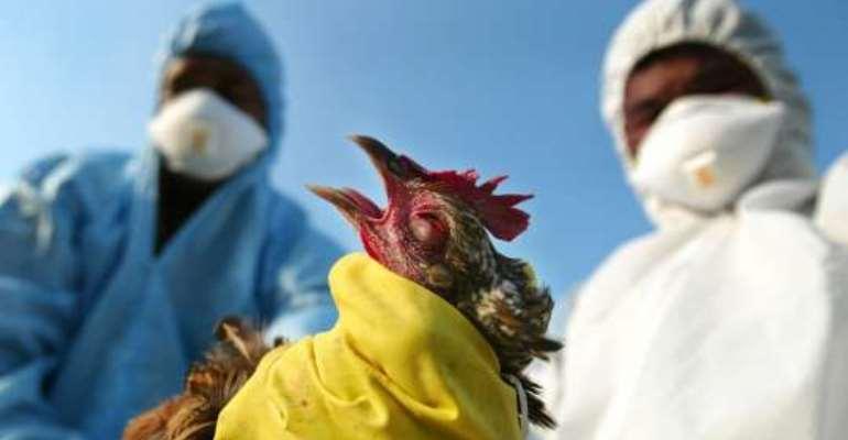 Eastern Region steps-up strategies to avoid Bird-flu Outbreak
