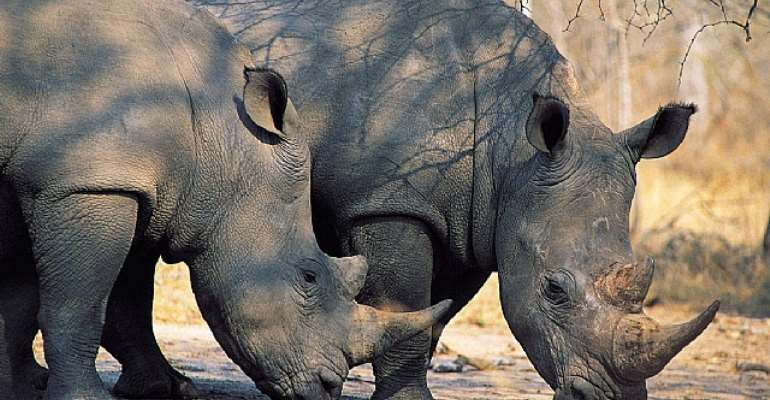 Seventh Rhino Killed In Assam's Kaziranga This Year
