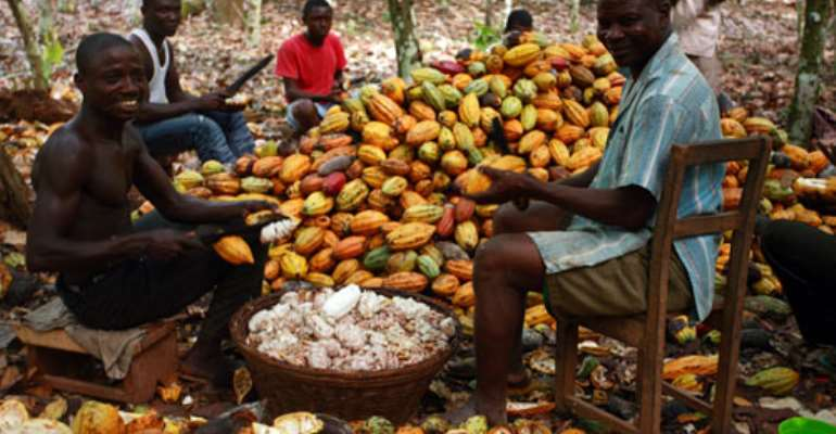 Cocoa farmers call for re-introduction of Akuafo Cheque
