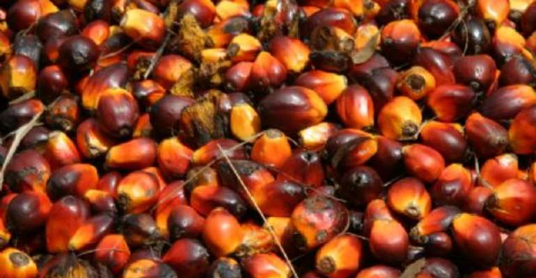 Ghana To Increase Oil Palm Production