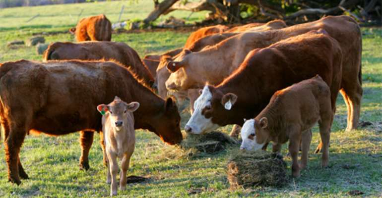 Peasant Farmers Advocate Cattle Ranching Law