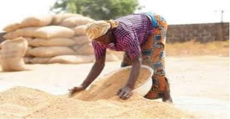 Government allocates rice production targets to regions