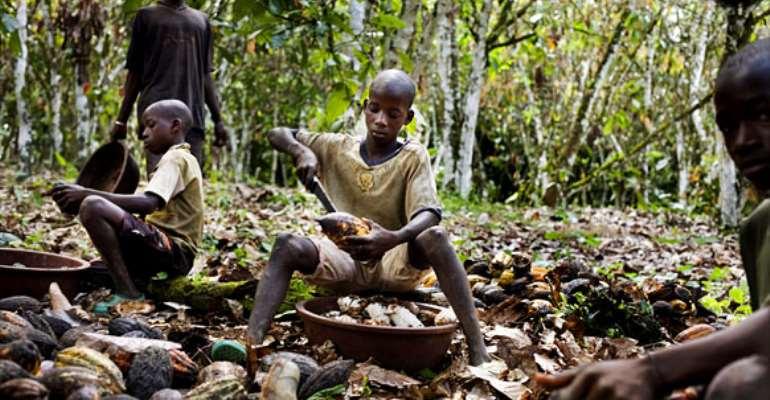 Child labour cocoa
