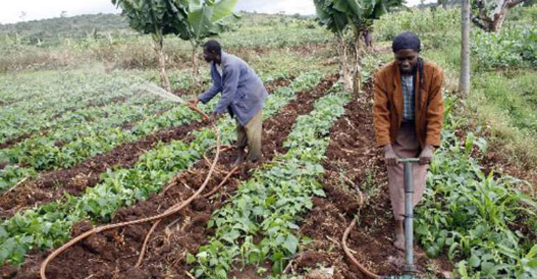 Efforts To Boost Food Security Intensified In Ghana