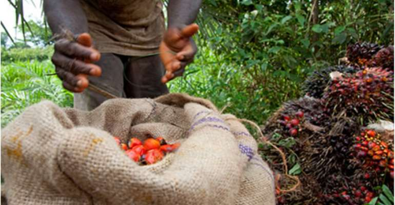 Yara Ghana lends support to oil palm sustainability