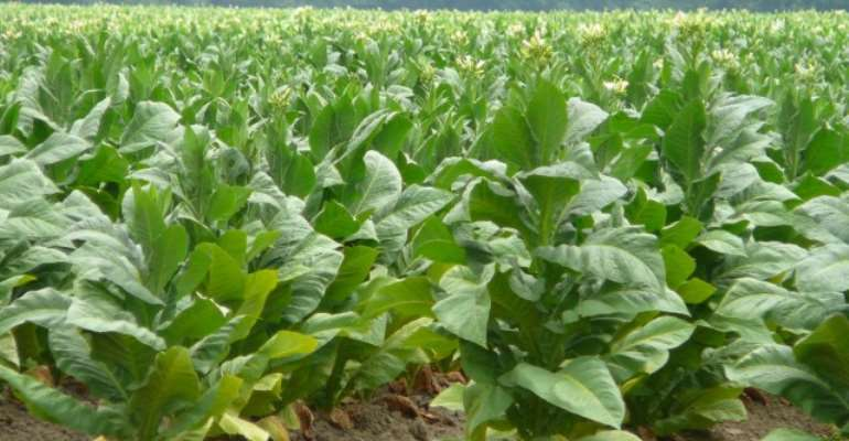 Tobacco is hazardous to health, no matter the form
