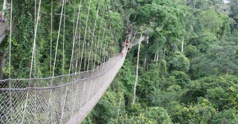 The Collapse Of The Bunso Canopy Walkway: The Cost Of Whitewash And Window Dressing