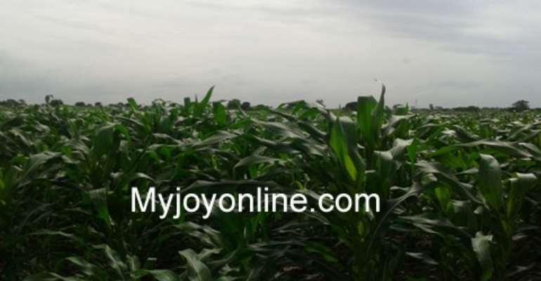 Ghanaian farmers boosted by Israeli's farming skills