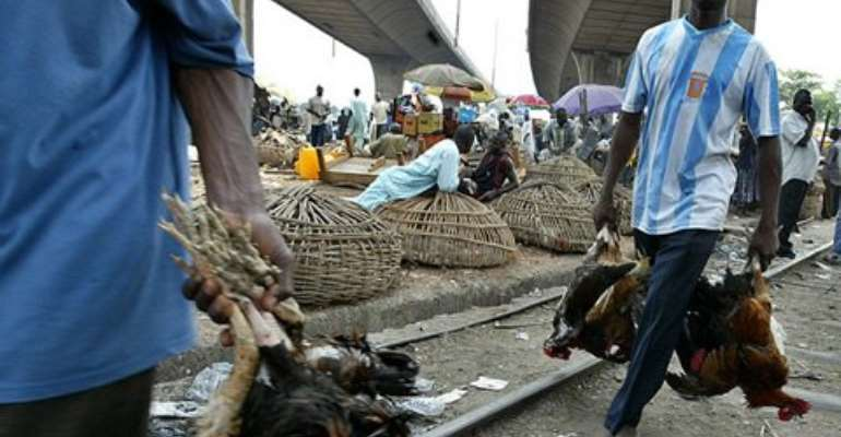 Government bans movement of poultry products, feed from Accra