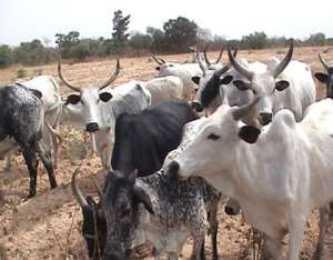 Livestock Farmers To Benefit From 70,000 Ruminants