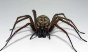 Man tried to pay bill with spider drawing
