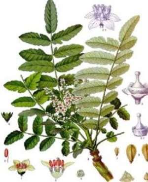 Symbols Linked To Christmas - Frankincense