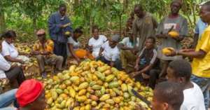 Gov't Must Leave Cocoa Pricing To Farmers