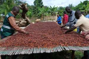 Youth Encouraged To Go Into Cocoa Production