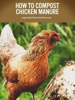chicken manure fertilizer