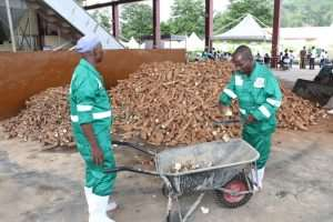 About 3,000 To Be Engaged At Adaklu Starch Factory