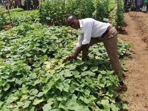 Prioritize 'Agriculture Extension Services' In Ghana