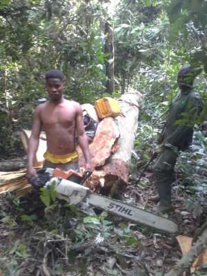 Illegal Chainsaw Operators Busted At Atiwa