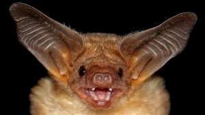 Primates Or Bats Are Not The Causes Of Ebola In Africa