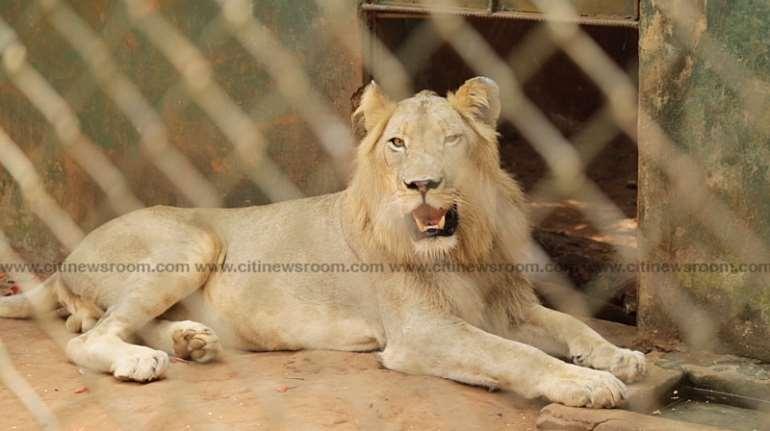 123202030605-1j041p5ccw-accra-zoo-1