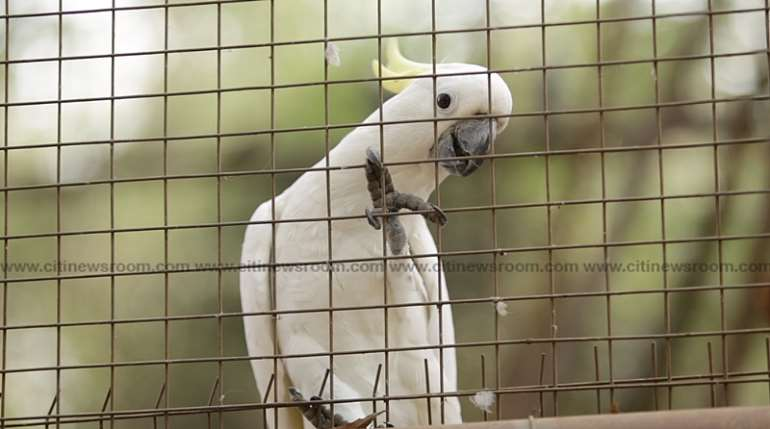 123202030605-g30n1r5edx-accra-zoo-7