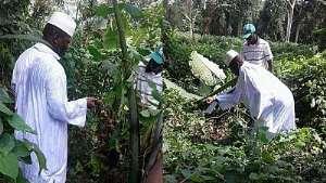 Yahya Jammeh in his farm