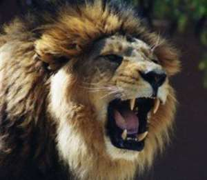Nigerian Zookeeper Killed By A Lion
