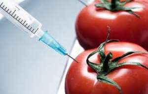 Will GMOs Replace Conventional Seeds?