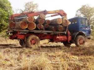 Rosewood Loggers Invade Wechiau Hippo Sanctuary